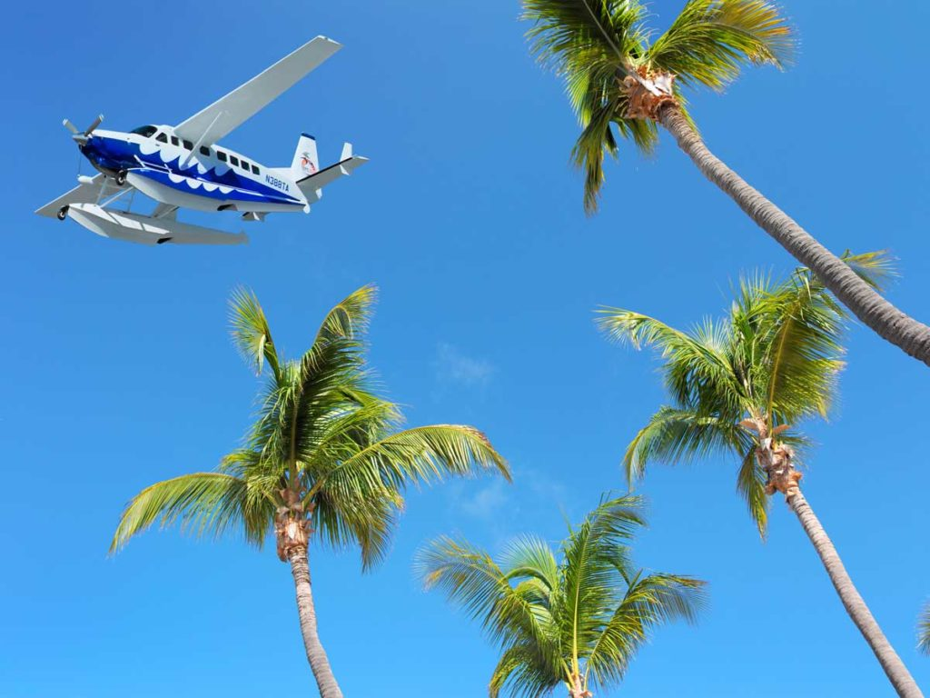 Plane and Palm trees in Key West, FL